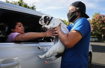 MISSION VIEJO, CALIFORNIA - JUNE 23: A veterinary technician take a dog from a vehicle to be vaccinated nearby at a drive-through pet vaccine clinic at Mission Viejo Animal Services Center amid the COVID-19 pandemic on June 23, 2020 in Mission Viejo, California. The vaccine clinic is usually conducted by walk-in but was held as a drive-through for safety reasons as the spread of the coronavirus continues. Some dogs were vaccinated inside their owner's vehicles while other dogs and cats received their vaccines outside the car.  (Photo by Mario Tama/Getty Images)