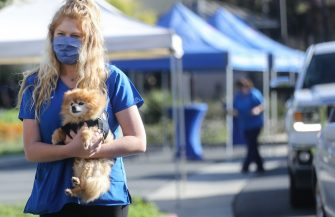 MISSION VIEJO, CALIFORNIA - JUNE 23: A veterinary technician carries a dog from a vehicle to be vaccinated at a drive-through pet vaccine clinic at Mission Viejo Animal Services Center amid the COVID-19 pandemic on June 23, 2020 in Mission Viejo, California. The vaccine clinic is usually conducted by walk-in but was held as a drive-through for safety reasons as the spread of the coronavirus continues. Some dogs were vaccinated inside their owner's vehicles while other dogs and cats received their vaccines outside the car.  (Photo by Mario Tama/Getty Images)