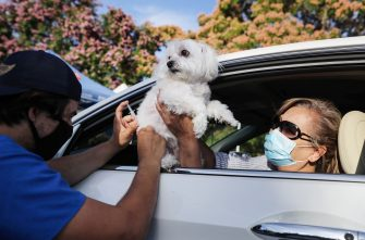 MISSION VIEJO, CALIFORNIA - JUNE 23:  A veterinary technician vaccinates Cohiba the dog as owner Sasha Cardenti assists at a drive-through pet vaccine clinic at Mission Viejo Animal Services Center amid the COVID-19 pandemic on June 23, 2020 in Mission Viejo, California. The vaccine clinic is usually conducted by walk-in but was held as a drive-through for safety reasons as the spread of the coronavirus continues. Some dogs were vaccinated inside their owner's vehicles while other dogs and cats received their vaccines outside the car.  (Photo by Mario Tama/Getty Images)