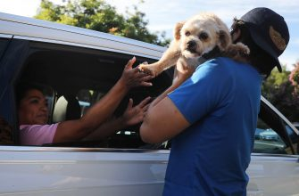 MISSION VIEJO, CALIFORNIA - JUNE 23: A veterinary technician takes a dog from a vehicle to be vaccinated nearby at a drive-through pet vaccine clinic at Mission Viejo Animal Services Center amid the COVID-19 pandemic on June 23, 2020 in Mission Viejo, California. The vaccine clinic is usually conducted by walk-in but was held as a drive-through for safety reasons as the spread of the coronavirus continues. Some dogs were vaccinated inside their owner's vehicles while other dogs and cats received their vaccines outside the car.  (Photo by Mario Tama/Getty Images)