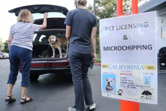 MISSION VIEJO, CA - JUNE 23: A dog stands in a vehicle after being vaccinated nearby at a drive-through pet vaccine clinic at Mission Viejo Animal Services Center amid the COVID-19 pandemic on June 23, 2020 in Mission Viejo, California. Pet licensing and microchipping were also available. The vaccine clinic is usually conducted by walk-in but was held as a drive-through for safety reasons as the spread of the coronavirus continues. Some dogs were vaccinated inside their owner's vehicles while other dogs and cats received their vaccines outside the car.  (Photo by Mario Tama/Getty Images)
