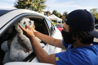 MISSION VIEJO, CA - JUNE 23:  A veterinary technician (R) prepares to vaccinate a dog named Cohiba at a drive-through pet vaccine clinic at Mission Viejo Animal Services Center amid the COVID-19 pandemic on June 23, 2020 in Mission Viejo, California. The vaccine clinic is usually conducted by walk-in but was held as a drive-through for safety reasons as the spread of the coronavirus continues. Some dogs were vaccinated inside their owner's vehicles while other dogs and cats received their vaccines outside the car.  (Photo by Mario Tama/Getty Images)