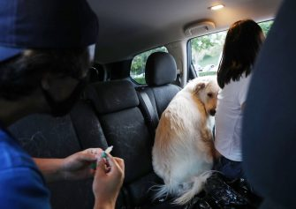 MISSION VIEJO, CALIFORNIA - JUNE 23: A dog shies away as a veterinary technician prepares to vaccinate at a drive-through pet vaccine clinic at Mission Viejo Animal Services Center amid the COVID-19 pandemic on June 23, 2020 in Mission Viejo, California. The vaccine clinic is usually conducted by walk-in but was held as a drive-through for safety reasons as the spread of the coronavirus continues. Some dogs were vaccinated inside their owner's vehicles while other dogs and cats received their vaccines outside the car.  (Photo by Mario Tama/Getty Images)