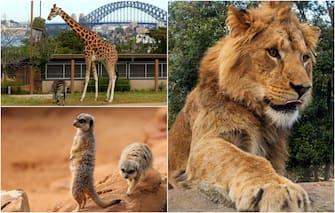 Zoo Sydney Leoni