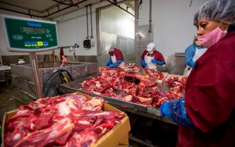 Workers chop and package beef at Jones Meat & Food Services in Rigby, Idaho, May 26, 2020. - As coronavirus clusters in slaughterhouses around the world continue to multiply, health experts are calling for better virus monitoring to prevent further infection. Slaughterhouses are shutting down across the United States after thousands of cases were confirmed. Four managers responsible for ensuring social distancing barriers have died. The Centers for Disease Control (CDC) estimated that at least 5,000 meat and poultry workers have contracted the virus in the US alone. Local meat processors are swamped with orders in the wake of the closing and interruptions of large packing houses caused by the COVID-19 virus.  Owner Brent Jones says his business is three or four times busier than normal with his employees processing up to 100 cows a week. Local demand for meat is very high, but the cost of hamburger is what used to be the price of steak. To bypass the high prices and shortages, locals buy animals from ranchers and farmers and have local butchers kill and process an entire cow of pig, then store the meat in freezers. (Photo by Natalie Behring / AFP) (Photo by NATALIE BEHRING/AFP via Getty Images)
