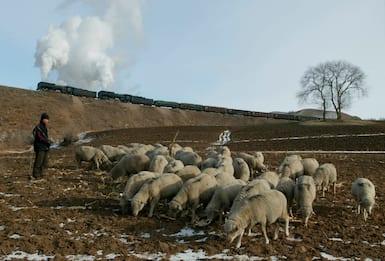 Pastore malato di peste in Mongolia, innalzata allerta in Cina