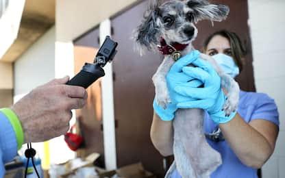 Coronavirus: 26 specie animali a rischio contagio a contatto con uomo