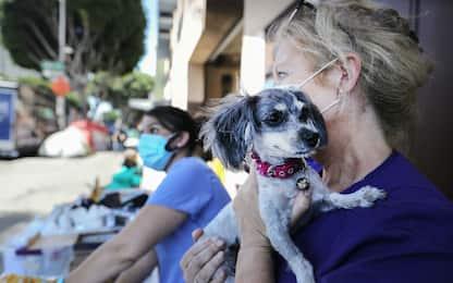 Coronavirus California, veterinari curano gli animali dei senzatetto