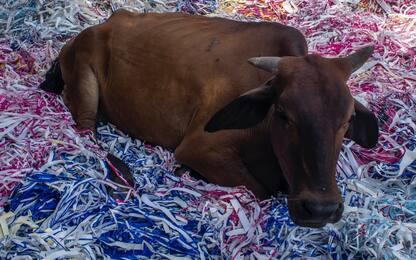 India, tre uomini accusati di aver rubato mucche linciati dalla folla