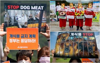 Proteste contro carne cane Corea