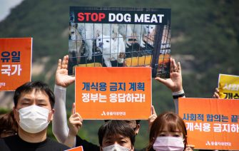 epa08548869 Members of an animal activist group hold placards during a campaign against eating dog meat, near the presidential house in Seoul, South Korea, 16 July 2020. The protesters voiced their objection to eating dog meat and call for the government to enact a law prohibiting dog-meat consumption.  EPA/JEON HEON-KYUN
