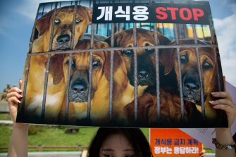 epa08548868 A members of ana animal activist group holds a placard during a campaign against eating dog meat, near the presidential house in Seoul, South Korea, 16 July 2020. The protesters voiced their objection to eating dog meat and call for the government to enact a law prohibiting dog-meat consumption.  EPA/JEON HEON-KYUN