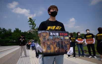 Corea del Sud, proteste a Seul contro consumo di carne di cane. FOTO