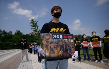 Anti-dog meat protesters hold a rally outside the presidential Blue house on July 16, 2020. - South Korea marks 'Chobok', the first day of what is traditionally known as the hottest period of the year. Typically dog meat dishes are consumed to mark the occasion, although restaurateurs say demand has decreased in recent years. (Photo by Ed JONES / AFP) (Photo by ED JONES/AFP via Getty Images)