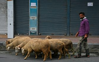 A shepherd drives a flock of sheep during a lockdown imposed by authorities after a sudden surge of COVID-19 coronavirus cases, in Srinagar on July 21, 2020. - India on July 17 hit a million coronavirus cases, the third-highest total in the world, with no sign yet of the infection curve flattening as new cases emerge in rural areas. More than 25,000 people have died nationally. (Photo by TAUSEEF MUSTAFA / AFP) (Photo by TAUSEEF MUSTAFA/AFP via Getty Images)