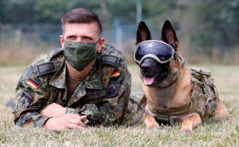 epa08564077 An explosives detection dog poses at School for Service Dogs of the Bundeswehr in Ulmen near Koblenz, Germany, 24 July 2020. In the German Bundeswehr Graefin-von-Maltzan barracks in Ulmen, service dogs are being trained as sniffer dogs for the coronavirus Covid-19.  EPA/RONALD WITTEK