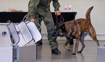 epa08564125 A Coronavirus sniffer dog during a training session at the School for Service Dogs of the Bundeswehr in Ulmen near Koblenz, Germany, 24 July 2020. In the German Bundeswehr Graefin-von-Maltzan barracks in Ulmen, service dogs are being trained as sniffer dogs for the coronavirus Covid-19.  EPA/RONALD WITTEK