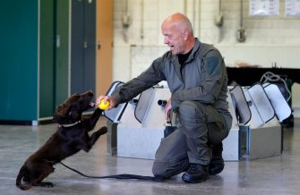 epa08564134 Joe a Coronavirus sniffer dog and his trainer during a training session at the School for Service Dogs of the Bundeswehr in Ulmen near Koblenz, Germany, 24 July 2020. In the German Bundeswehr Graefin-von-Maltzan barracks in Ulmen, service dogs are being trained as sniffer dogs for the coronavirus Covid-19.  EPA/RONALD WITTEK