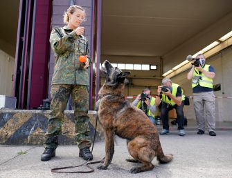 epa08564127 A Coronavirus sniffer dog during a training session at the School for Service Dogs of the Bundeswehr in Ulmen near Koblenz, Germany, 24 July 2020. In the German Bundeswehr Graefin-von-Maltzan barracks in Ulmen, service dogs are being trained as sniffer dogs for the coronavirus Covid-19.  EPA/RONALD WITTEK
