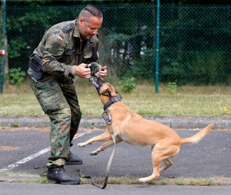 epa08564076 A dog trainer of the Bundeswehr with his dog at the School for Service Dogs of the Bundeswehr in Ulmen near Koblenz, Germany, 24 July 2020. In the German Bundeswehr Graefin-von-Maltzan barracks in Ulmen, service dogs are being trained as sniffer dogs for the coronavirus Covid-19.  EPA/RONALD WITTEK