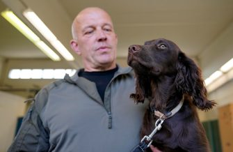 epa08564126 Joe a Coronavirus sniffer dog and his trainer during a training session at the School for Service Dogs of the Bundeswehr in Ulmen near Koblenz, Germany, 24 July 2020. In the German Bundeswehr Graefin-von-Maltzan barracks in Ulmen, service dogs are being trained as sniffer dogs for the coronavirus Covid-19.  EPA/RONALD WITTEK