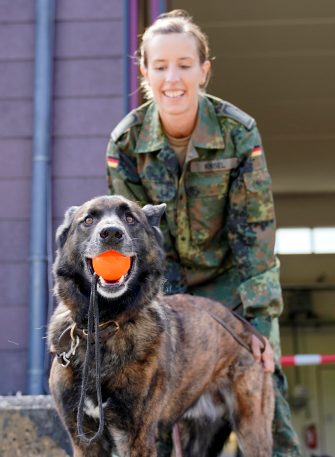 epa08564128 A Coronavirus sniffer dog during a training session at the School for Service Dogs of the Bundeswehr in Ulmen near Koblenz, Germany, 24 July 2020. In the German Bundeswehr Graefin-von-Maltzan barracks in Ulmen, service dogs are being trained as sniffer dogs for the coronavirus Covid-19.  EPA/RONALD WITTEK