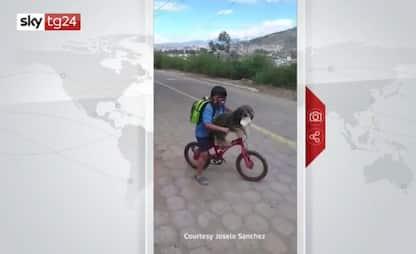 Coronavirus, bambino in Ecuador mette la mascherina al cane. VIDEO