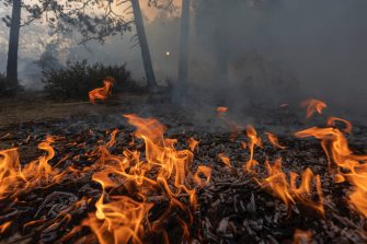 CHERRY VALLEY, CA - AUGUST 01: Flames creep through a forest understory at the Apple Fire as an excessive heat warning continues on August 1, 2020 in Cherry Valley, California. The fire began shortly before 5 p.m. the previous evening, threatening a large number of homes overnight and forcing thousands to flee before exploding to 12,000 acres this afternoon, mostly climbing the steep wilderness slopes of the San Bernardino Mountains.  (Photo by David McNew/Getty Images)