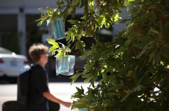 SAN ANSELMO, CALIFORNIA - AUGUST 10: Surgical masks in Ziploc bags hang from a tree at Creek Park on August 10, 2020 in San Anselmo, California. The group Age-Friendly Marin Network has started to hang clean face masks from trees in San Anselmo's Creek Park that are free to those who do not have a mask and to encourage people to wear masks to help control COVID-19.  (Photo by Justin Sullivan/Getty Images)