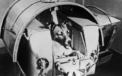 63 anni fa la cagnetta Laika veniva spedita nello spazio