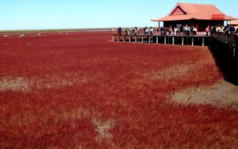 This picture taken on September 30, 2012 shows visitors at the Red beach scenic area in Panjin, northeast China's Liaoning province. The beach gets its name from its appearance, which is caused by a type of seaweed that flourishes in the saline-alkali soil.  CHINA OUT     AFP PHOTO        (Photo credit should read AFP/AFP/GettyImages)