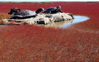 This picture taken on September 30, 2012 shows sculptures at the Red beach scenic area in Panjin, northeast China's Liaoning province. The beach gets its name from its appearance, which is caused by a type of sea weed that flourishes in the saline-alkali soil.  CHINA OUT     AFP PHOTO        (Photo credit should read AFP/AFP/GettyImages)