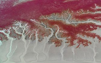 This photo taken on September 6, 2018 shows an aerial view of the Red Beach in Panjin in China's northeastern Liaoning province. - The beach gets its name from its appearance, which is caused by a type of sea weed that flourishes in the saline-alkali soil. (Photo by - / AFP) / China OUT        (Photo credit should read -/AFP via Getty Images)