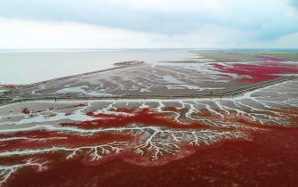 TOPSHOT - This photo taken on September 6, 2018 shows the Red Beach in Panjin in China's northeastern Liaoning province. - The beach gets its name from its appearance, which is caused by a type of sea weed that flourishes in the saline-alkali soil. (Photo by - / AFP) / China OUT /         (Photo credit should read -/AFP via Getty Images)