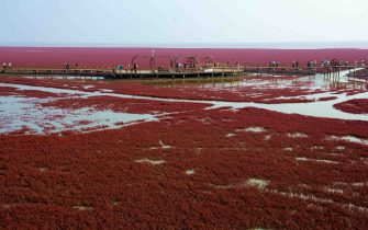 Panjin, CHINA-September 26 2016:?(EDITORIAL?USE?ONLY.?CHINA?OUT) Visitors flock to the red beach in Panjin, northeast China¡¯s Liaoning, September 26, 2016. The red beach isn¡¯t covered in sand, instead, it¡¯s covered by a type of sea weed. As autumn comes, the red beach embraces its most beautiful period for visiting, turning vividly red.  (Photo by ) *** Please Use Credit from Credit Field *** (Sipa Asia / IPA/Fotogramma, Panjin - 2016-09-27) p.s. la foto e' utilizzabile nel rispetto del contesto in cui e' stata scattata, e senza intento diffamatorio del decoro delle persone rappresentate