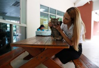 epa08645104 A Thai transgender student Siwakorn Thatsanasorn wearing female university student uniform plays with a cat during a break at Thammasat University Rangsit Campus in Pathum Thani province, Thailand, 24 August 2020 (issued 04 September 2020). Outdated regulations at most schools and universities in Thailand mean many transgender people are forced to wear a uniform in class that does not match their gender identity. Since June, Thammasat University has removed those regulations, allowing 20 year-old Siwakorn 'Buzzy' Thatsanasorn to wear the outfit of her choice at school. But Siwakorn says that transgenders in primary and secondary schools are still not allowed to choose gender-appropriate school uniforms.  EPA/RUNGROJ YONGRIT  ATTENTION: This Image is part of a PHOTO SET
