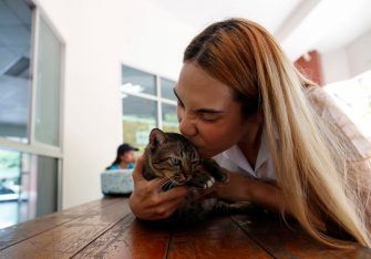 epa08645105 A Thai transgender student Siwakorn Thatsanasorn wearing female university student uniform plays with a cat during a break at Thammasat University Rangsit Campus in Pathum Thani province, Thailand, 24 August 2020 (issued 04 September 2020). Outdated regulations at most schools and universities in Thailand mean many transgender people are forced to wear a uniform in class that does not match their gender identity. Since June, Thammasat University has removed those regulations, allowing 20 year-old Siwakorn 'Buzzy' Thatsanasorn to wear the outfit of her choice at school. But Siwakorn says that transgenders in primary and secondary schools are still not allowed to choose gender-appropriate school uniforms.  EPA/RUNGROJ YONGRIT  ATTENTION: This Image is part of a PHOTO SET