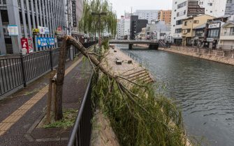 FUKUOKA, JAPAN - SEPTEMBER 07: A collapsed tree is seen on September 07, 2020 in Fukuoka, Japan. Typhoon Haishen affected a large part of Kyushu island and around 8.3 million people are subject to evacuation orders. (Photo by Yuichi Yamazaki/Getty Images)