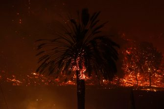 epa08702854 A palm tree burns as the Glass Fire spreads along the famous Silverado Trail road near the town of Deer Park in Napa County, California, USA, 27 September 2020. Northern California is under extreme fire alert.  EPA/JOHN G. MABANGLO