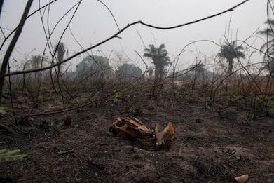 Brasile, Amazzonia inserita nel Guinness per deforestazione