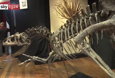 Francia, scheletro di allosauro venduto all'asta per 2,5 milioni VIDEO