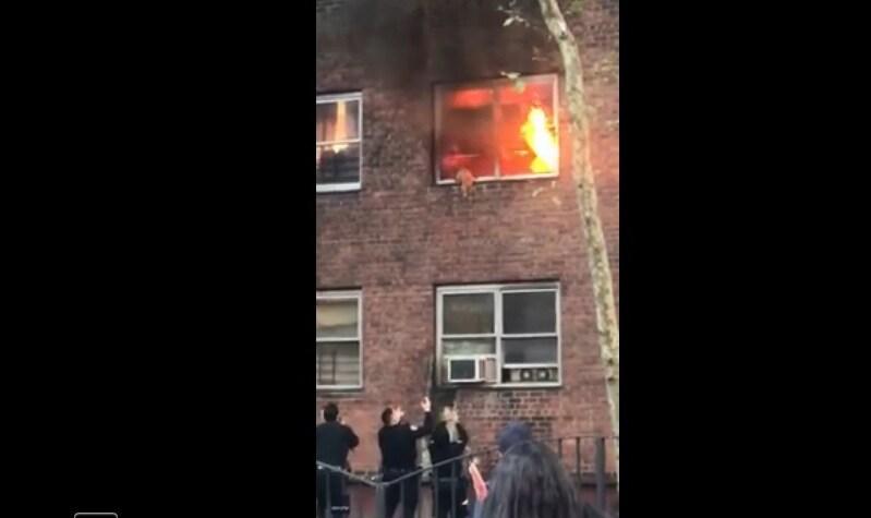 New York: gatto si lancia da un edificio in fiamme e si salva. VIDEO