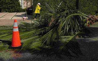 Traffic cones mark a downed palm tree on Peruvian Avenue in Palm Beach, Fla., on Monday, November 9, 2020. Overnight winds and rain from Tropical Storm Eta caused minor vegetation damage across Palm Beach County. (Photo by THOMAS CORDY/USA Today Network/Sipa USA) (W. Palm Beach - 2020-11-09, USA TODAY Network / IPA) p.s. la foto e' utilizzabile nel rispetto del contesto in cui e' stata scattata, e senza intento diffamatorio del decoro delle persone rappresentate