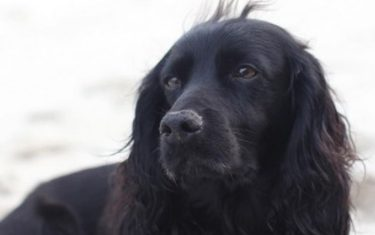 kensington royalDuke and Duchess of Cambridge has posted a photo on Instagram with the following remarks: Very sadly last weekend our dear dog, Lupo, passed away. He has been at the heart of our family for the past nine years and we will miss him so much. - W & CInstagram 22/11/2020 This is a private photo posted on social networks and supplied by this Agency. This Agency does not claim any ownership including but not limited to copyright or license in the attached material. Fees charged by this Agency are for Agency's services only, and do not, nor are they intended to, convey to the user any ownership of copyright or license in the material. By publishing this material you expressly agree to indemnify and to hold this Agency and its directors, shareholders and employees harmless from any loss, claims, damages, demands, expenses (including legal fees), or any causes of action or allegation against this Agency arising out of or connected in any way with publication of the material. (Instagram - 2020-11-22, private/IPASocialIT / IPA / IPA) p.s. la foto e' utilizzabile nel rispetto del contesto in cui e' stata scattata, e senza intento diffamatorio del decoro delle persone rappresentate