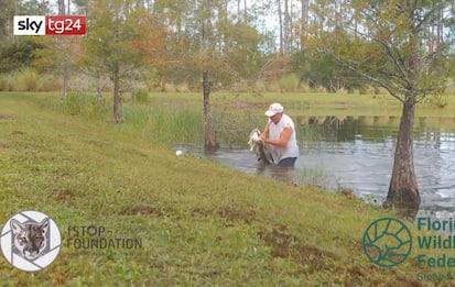 Florida, uomo salva cagnolino dall'alligatore senza buttare il sigaro