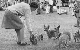 Queen Elizabeth II with her corgis at Virginia Water in Surrey, for the European Driving Championships, 12th May 1973. The Duke of Edinburgh is taking part in the sports. (Photo by George W. Hales/Fox Photos/Getty Images)