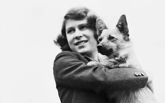 Princess Elizabeth holding a Corgi dog in the Royal Lodge, Windsor, April 1940.  (Photo by Lisa Sheridan/Hulton Archive/Getty Images)