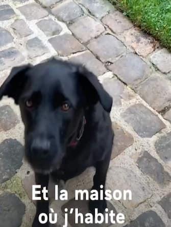 macron cane