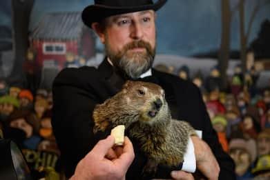 Giorno della marmotta, per Phil altre sei settimane di freddo