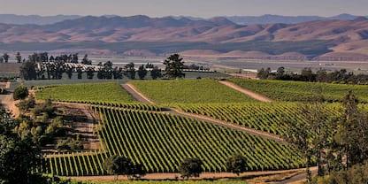 California, Santa Maria Valley paga i turisti che la visitano